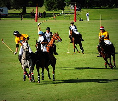 117th Hurlingham Club Open Championship, Argentina / 117 Abierto de Hurlingham YPF () Tags: vacation horse holiday latinamerica southamerica argentina argentine leather cheval nikon pony 70300mm polo rtw pferd vacanze tack hest roundtheworld paard sudamerica triplecrown  polopony amricadosul amricalatina globetrotter southernhemisphere zonasul amriquelatine polomatch  poloclub argentinien 16days  hurlingham equidae onhorseback amricadelsur sdamerika zonea hurlinghamclub worldtraveler  ariannin  repblicaargentina littleeurope laaguada  americadelsud chukkas argentinerepublic  argentinidad pologame poloteam ladolfina   d700 zonaa nikond700 chukkers abiertodehurlingham  triplecorona 117thhurlinghamopen hurlinghamopen capitaloftango  chukers tradiciondelpoloargentino