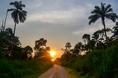 Roads of Lekoumou province, Congo (jbdodane) Tags: africa sunset bicycle forest cycling palmtrees dirtroad congo roads velo vlo cyclotourisme cycletouring day427 freewheelycom
