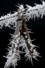 Winters Thorns (dkuttel) Tags: winter macro ice oregon canon backyard frost hoarfrost pacificnorthwest tamron 90mm icecrystals grassvalley easternoregon pacnw 90mmmacro canon5dmkiii