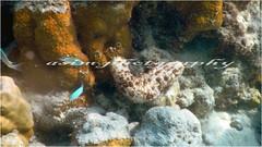 under sea at Andaman (asim chaudhuri(anurupa_chowdhury_yahoo.co.in) Tags: nature canon andaman underwaterphotography incredibleindia