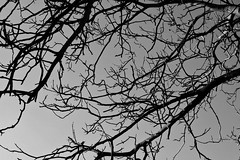 Ramas (Lograi) Tags: barcelona sky blackandwhite bw espaa tree byn blancoynegro geotagged blackwhite spain branch catalonia bn cielo rbol catalunya rama catalua berga espanya nikond40 geoetiquetada