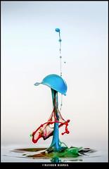 Drop collision-64. (Masudur Rahman Mamoon) Tags: waterdropletphotography waterdropcollisionphotography waterdroplet waterdropphotography watersplash highspeedwaterdropphotography highspeedphotography highspeedflashphotography glampsecatcher nikon810 nikon105mmmacrolens