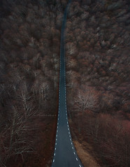 "Surreal road. (¡arturii!) Tags: wow amazing awesome superb interesting stunning impressive nice beauty great arturii arturdebattk ""canonoes6d"" gettyimages travel trip tour route viatge holidays vacations drone drones aerial up creative top above flight flying creativity idea original panorama surreal inception cool nature forest beech montseny catalonia catalunya europe road mountain straight winter red colors driving roadtrip"