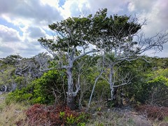 Prehistoric. (thnewblack) Tags: plantlife trees foliage google pixel pixelxl pixelperfect teampixel outdoors cancun mexico hdr 12mp android smartphone cameraphone