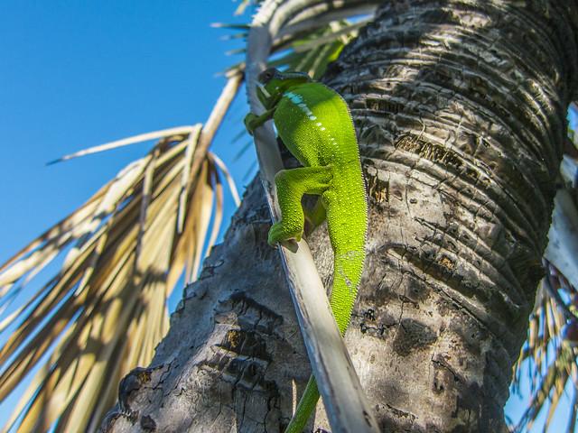 Madagascar10-072