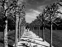 Tree avenue (rtb69) Tags: