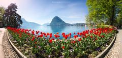 #035 Parco Ciani - Primavera 2017 (Enrico Boggia | Photography) Tags: parcociani luganese lugano parco enricoboggia 2017 aprile ceresio lagodilugano sansalvatore montesansalvatore tulipani fiori flower lake primavera