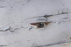 Spy Network (pwendeler) Tags: eye auge sony wall wand composing peelingoff abblättern weis white