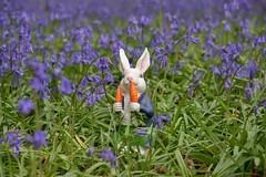 Happy Easter 2017 (cuppyuppycake) Tags: happy easter 2017 wanstead park bluebells rabbit bunny carrots nikon d7200