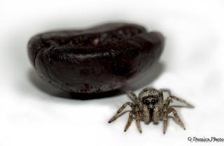 Little big Monster and his Coffee bean! Un Petit monstre et son grain de café