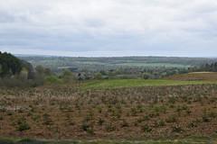 Christmas Tree Plantation (Dick Dangerous) Tags: uk england britain surrey hills greensands ridge hurt wood christmas tree plantation view