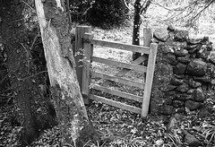Gate (Man with Red Eyes) Tags: delta100 ilford harman hc110 160 115mins v850 leicam2 summicron35mmf2 v4 iv analog blackwhite monochrome silverhalide a3minsb3mins sunnysixteen northumbria northumberland ingram riverbreamish gate wooden rural