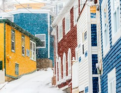 St. John's Colour (Karen_Chappell) Tags: stjohns jellybeanrow thebattery house houses home homes yellow blue red white snow snowing snowy weather nfld newfoundland canada atlanticcanada avalonpeninsula street road narrow eastcoast green colourful multicoloured colours colour color windows window
