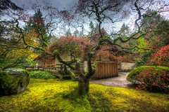 Fit to Flourish - Explored (KC Mike D.) Tags: tree spring garden flat branches blossoms house japanese portland oregon flourish fit grass moss rocks path washingtonpark tranquil oasis peace harmony tapestry