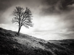Untitled (strachcall) Tags: trees landscape monochrome scotland lochlomondtrossachs tree blackwhite sky bw blackandwhite conichill clouds