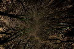 Look Up (Rob Pitt) Tags: samyang fisheye eastham ferry woods trees winter contrast wirral 8mm plant tree outdoor tangle texture abstract organic pattern forest landscape branchlet