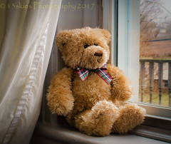 Doin' Nuttin' (HTBT) (13skies) Tags: window windowlight looking sitting chilling relaxing lazy bow cool glass curtain daytime daylight teddy teddybear teddybeartuesday happyteddybeartuesday nothing doingnothing waiting plaidbowtie comfort