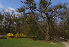 Park in castle Nymphenburg, Munich (tenokakos) Tags: munich nymphenburg germany