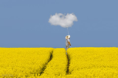 If the sky is grey let's paint it blue (Collin Key) Tags: blue joke landscape canola cloud nature white spring rape yellow field raps behlendorf sh germany de