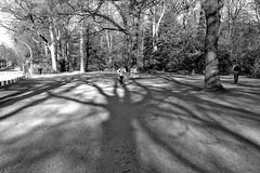 Shadow runner. (Hamburger Stadtpark) (Wallywest1968) Tags: hamburg stadtpark 2017 street people bw