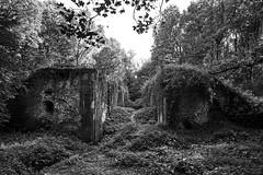 Palingbeek, Zillbeke (bm^) Tags: nature forest zillebeke westvlaanderen belgië bos belgique belgium bw black white zwartwit boom tree ieper ypres nikon d700 nikond700 zeiss planar5014zf westernflanders ruin ruine canal canaal