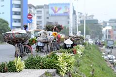 _DSC6951 (ngocnta.1311) Tags: flower while lily flowermarket vietnamflower