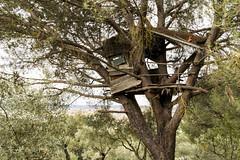 MARZO2017_207 (gchamo) Tags: old treehouse nature naturelovers springtime primavera españa spain trees arbol casadelarbol mistery misterious misterioso nikon d3300 1855 photooftheday photographylovers photography flikr flikrlovers