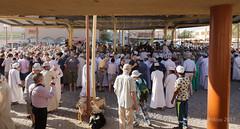 Nizwa, the goat souk (Sylviane Moss) Tags: oman nizwa goat catllre souk suk souq market