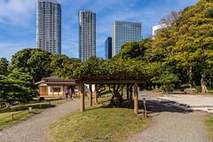 IMG_2482 (Evgeny Gorodetskiy) Tags: sunshine autumn garden landscape building travel cityscape outdoor weekend city park skyscrapper himarikiyu japan tokyo minatoku tōkyōto япония jp