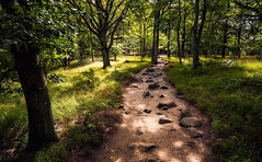 Surrounding glow (Appe Plan) Tags: forest tree woods leaf path pathway trail rocks nature explore south summer green beautiful beauty sweden skåne appe nikon d700