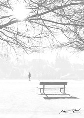 The Loneliest Place (mattb8uk) Tags: bench canon canon70d canonphotography mattbrand mattbrandphotography mdbrand sun inspiration vitoria grey vitoriagrey tree bnw white shadows