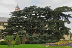 Zwei Libanonzedern (nordelch61) Tags: badhomburg schlosgarten blumen blüten baum bäume libanonzeder tulpen frühling hessen