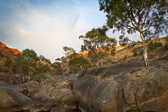 Reedy Creek (Trace Connolly) Tags: australia australianlandscape australianscenery reedycreek creek river trees rocks country countryside yellow sunrise landscape redgums sunshine gold red blue orange moss boulders canon sigma canon7d sigma1750f28exdcoshsm