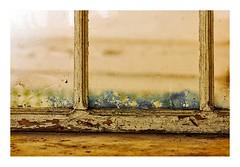 Porto, dernier petit détail (Marie Hacene) Tags: bolhao porto portugal fenêtre textures ancien abandon