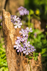 DSC08030-Edit.jpg (smaustin56) Tags: illinois flowersplants lakeofthewoods wildflowers