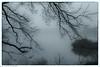 misty morning 3-30-17 (kmac1960) Tags: trees fog blackandwhite capturekc canon tamron kansas shawneemissionpark