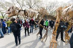 Super cool dinosaur skeletons (Josh Thompson) Tags: chicago d7000 dinosaur marchforsciencechicago model rally sigma1020mmf456exdc skeleton lightroom5