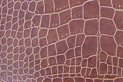 Brown crocodile patterned artificial leather. (icovery) Tags: brown crocodile animal patterned artificial leather skin background design animalskin backdrop texture surface detail abstract pattern macro material object bag wallet tracery thailand