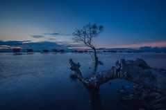 Bodgaya Island at blue hour (Syahrel Azha Hashim) Tags: horizon leadinglines sony clearsky shallow structure nopeople malaysia housesonstilts ocean dramaticsky scenic semporna sabah roots ilce7m2 sonya7 slowshutter 35mm holiday view fishingvillage sunset dof seagypsies getaway bodgayaisland a7ii colorimage vacation bluehour prime light clouds longexposure details colorful village beautiful travel syahrel naturallight nature colors 2016 simple silhouette tree detail