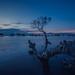 Bodgaya Island at blue hour