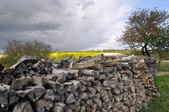 Weinviertel Niederösterreich Streifing_DSC1181 (reinhard_srb) Tags: niederösterreich weinviertel streifing raps feld blüte gelb sonne wolken himmel blau bäume wind weitwinkel extrem holz brennholz vorrat stapel baumstamm scheit