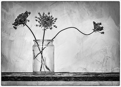 Perfect Imperfection (RonnieLMills) Tags: dried flower seed heads trio glass jar wooden shelf still life mono monochrome blackandwhite noiretblanc blancoynegro perfect imperfection