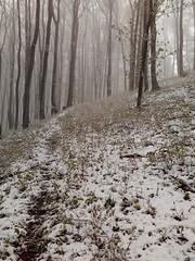 Wildpfad (shortscale) Tags: pfad weg wald schnee nebel baum