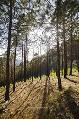 Margalla Hills (Aadilsphotography) Tags: trees grass sky wide angle 14mm samyang landscape margalla hills pakistan 6d aadils fadils aadil shadow natural nature mountains adventure