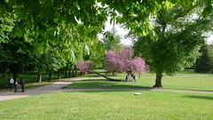 Un 1er Mai à Oissel - Le parc municipal du Château de la Marquise (jeanlouisallix) Tags: oissel seine maritime haute normandie france paysage landscape panorama natur la parc park jardin garden arbres