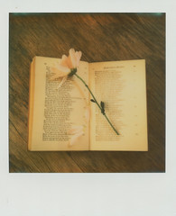 Challenge #6 The Language of Flowers (~ Meredith ~) Tags: flowers 6 color art love film ian polaroid sx70 emotion affection victorian teh wilson romantic meredith language challenge protect 2013 px70 floriography 26by26 impossibleproject