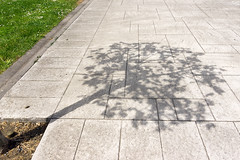 solitary tree shadow in the street (Mikel Martnez de Osaba) Tags: park street city light shadow sunlight tree nature grass silhouette outdoors spread spring alone natural pavement branches perspective sunny diagonal growth shade lonely form organic shape solitary planting ecological expansion metaphors