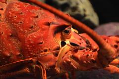 Monterey Aquarium. (LisaDiazPhotos) Tags: aquarium monterey lisadiazphotos