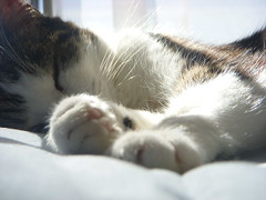 Sleeping in the sun (natalie.hope) Tags: sleeping sun cute cat kitty whiskers paws