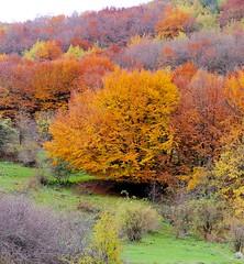 Bosco Monte Volturino Marsicovetere PZ 03 (ReX Ray) Tags: autumn italy mountain woods italia ray fuji basilicata potenza rex autunno bosco lucania rexray marsicovetere volturino fujix10